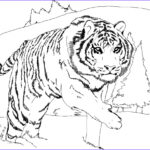 Coloring Pages For Kids Free Cool Photos Free Printable Tiger Coloring Pages For Kids