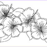 Coloring Pages Of Flowers Inspirational Photos Free Printable Hibiscus Coloring Pages for Kids