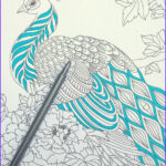Coloring Peacock Feathers Cool Photography Step By Step Coloring Peacock Feathers The Coloring