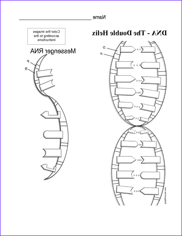 Dna Replication Coloring Worksheet Cool Photography Dna Coloring