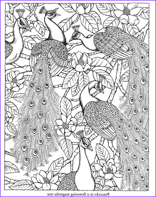 Dover Coloring Pages Bestofcoloring