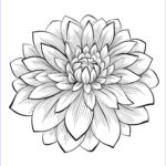 Flower Coloring Sheets Awesome Gallery Dahlia Color One Of The Most Beautiful Flowers From The