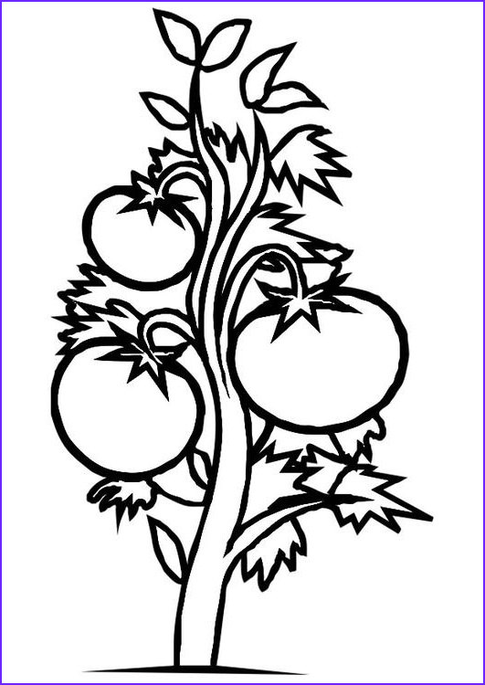 FOOD COLORING AND PLANTS Free Coloring Pages