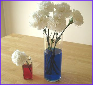 Food Coloring Flowers craft ideas for Work