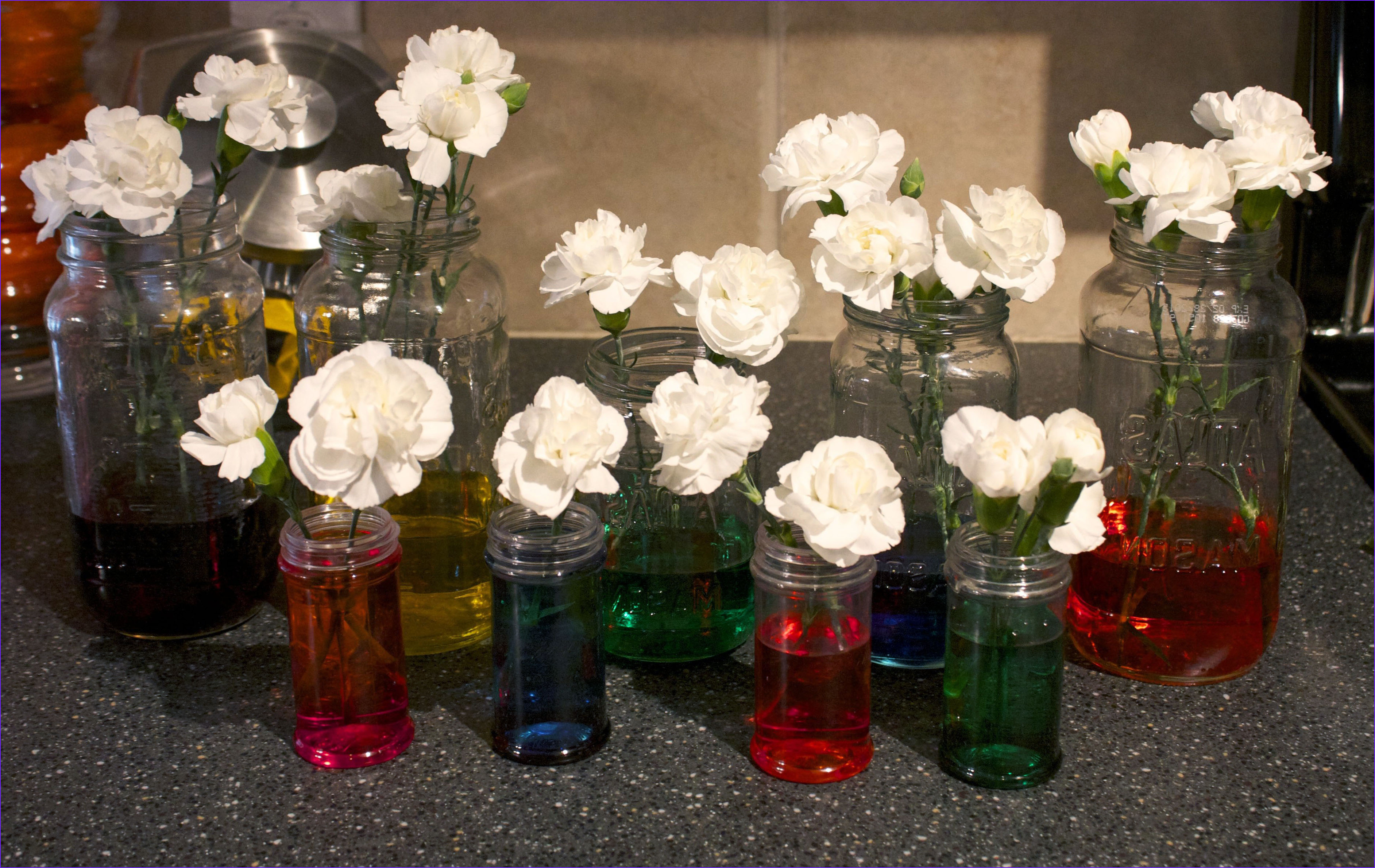 Food Coloring Flowers Best Of Stock Flowers and Trees – Discovering Our normal