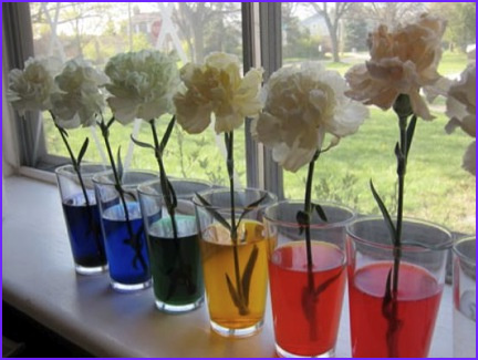 Turn white flowers into colorful blooms