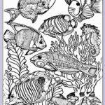 Free Adult Coloring Book Pages Inspirational Image Adult Free Fish Coloring Pages