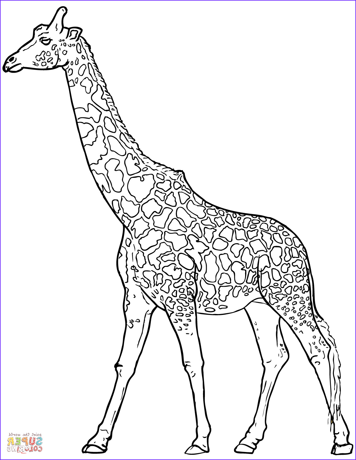 Girraffe Coloring New Images Realistic Giraffe Coloring Page