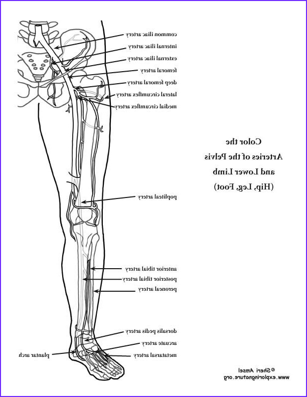 Human Anatomy Coloring Book Pdf Awesome Images 80 Best Images About Human Anatomy On Pinterest