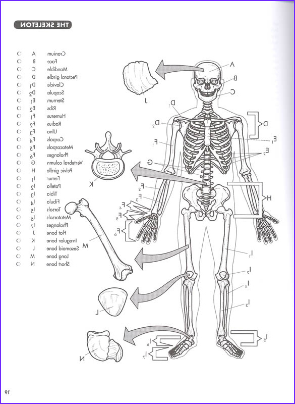Human Anatomy Coloring Book Pdf Luxury Images Anatomy Coloring Book Princeton Review 4ed