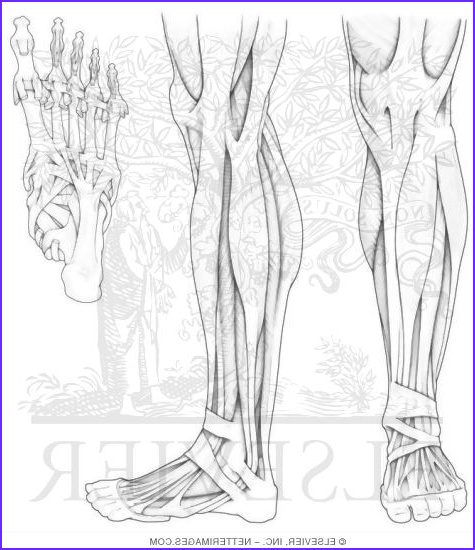 Tags for human anatomy and physiology marieb 10th pdf