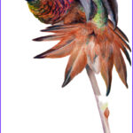 Is Red Food Coloring Harmful To Hummingbirds Luxury Photography Do S & Dont S Hummingbird Food