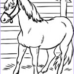 Kindergarten Coloring Awesome Photography Horse Coloring Pages Preschool And Kindergarten