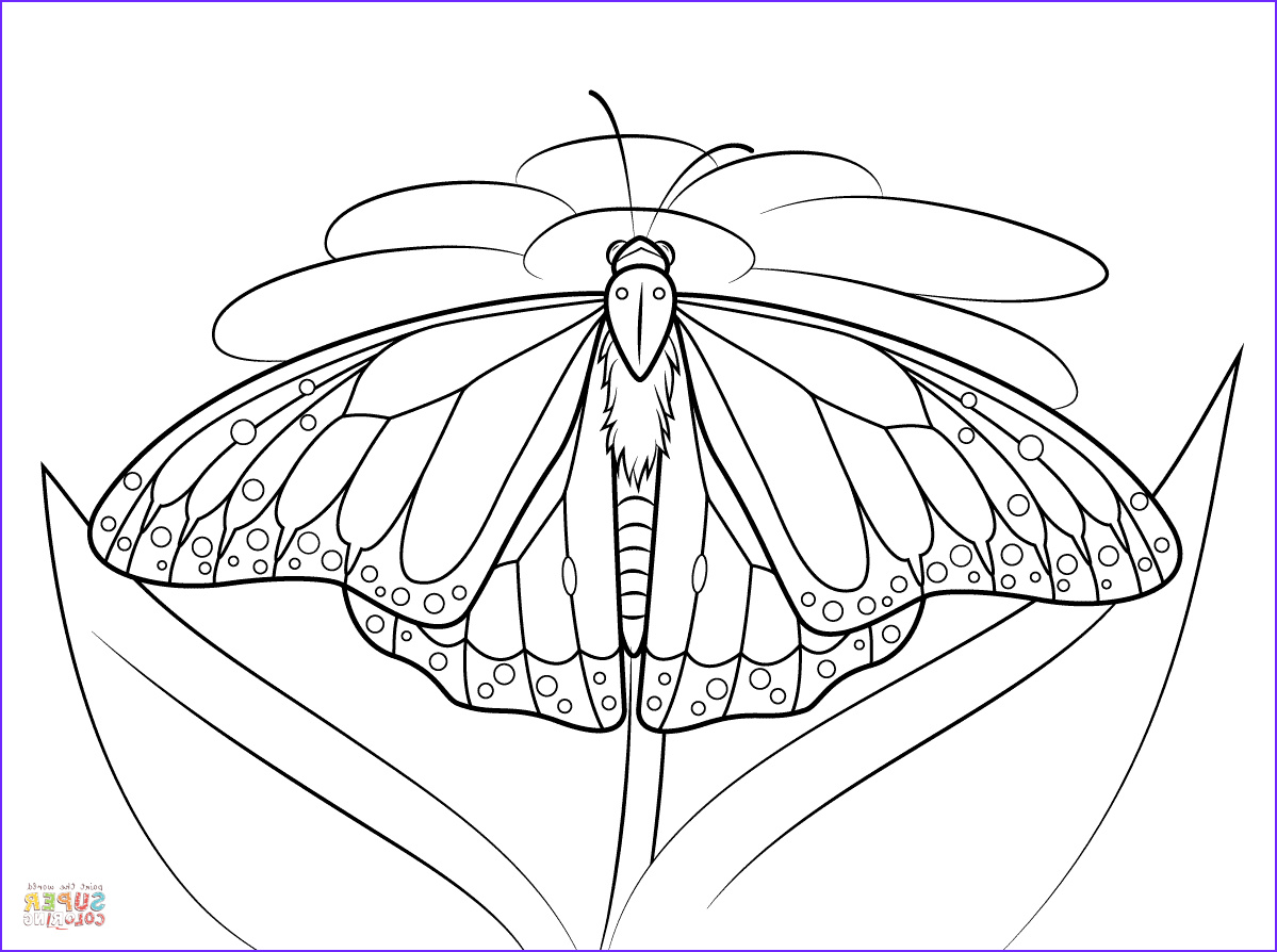 Monarch butterfly Coloring Page Beautiful Image Monarch butterfly Sits On A Daisy Coloring Page