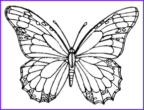 Butterfly Butterfly Adult Coloring Page Butterfly