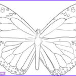 Monarch Butterfly Coloring Page Inspirational Gallery Free Monarch Butterfly Template Download Free Clip Art