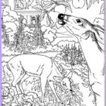 Nature Coloring Books For Adults Awesome Collection Free Printable Nature Coloring Pages For Kids Best
