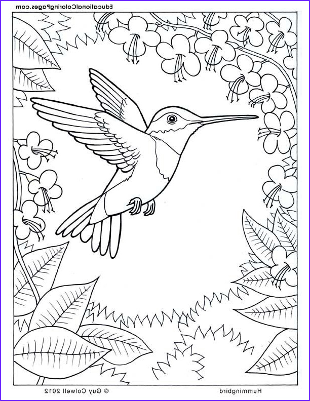 Nature Coloring Pages Beautiful Gallery Colouring Pages Nature Coloring Home