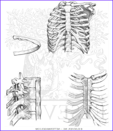 Netters Anatomy Coloring Book Awesome Images Illustrations In Anatomy Coloring Book Hansen 1e