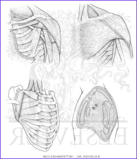 Netters Anatomy Coloring Book New Collection Illustrations In Anatomy Coloring Book Hansen 1e