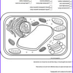 Plant Cell Coloring Elegant Images 25 Best Typical Plant Cell Ideas On Pinterest
