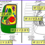 Plant Cell Coloring New Collection Cells 1 Plant Cell Coloring Worksheet With Questions