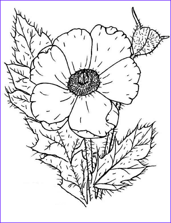 Poppy Coloring Best Of Photos Poppy Of Poppy Coloring Page