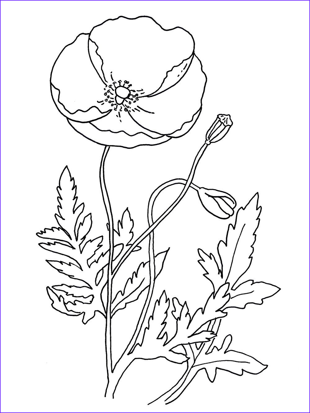 Poppy Coloring Luxury Photography Free Coloring Pages Coloring Poppy Free Remembrance