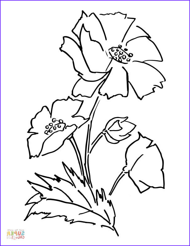 Poppy Coloring New Stock Poppy Flower Coloring Page