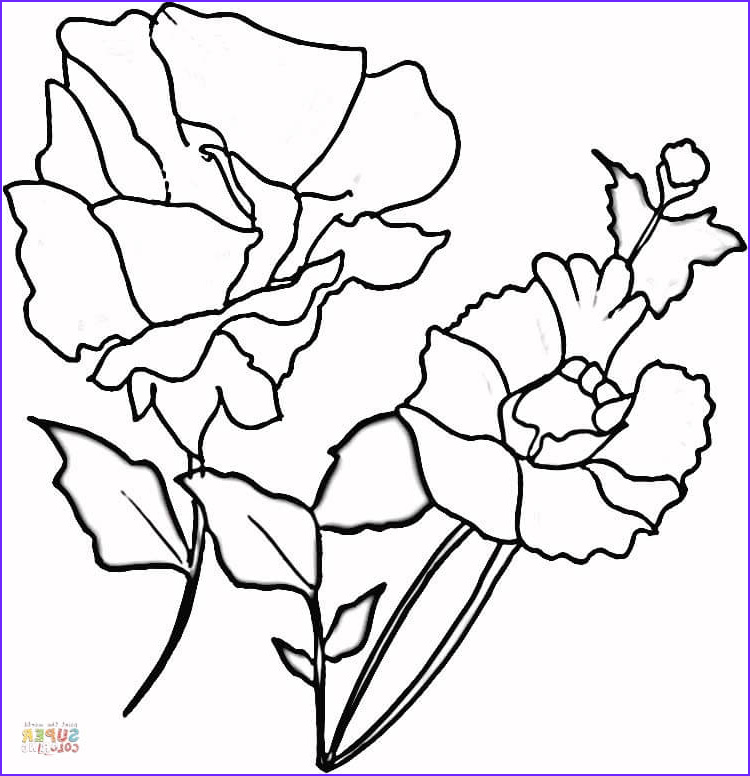 Poppy Coloring Unique Images Red Poppies Coloring Page