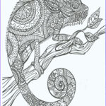 Printable Adult Coloring Beautiful Stock Cameleon