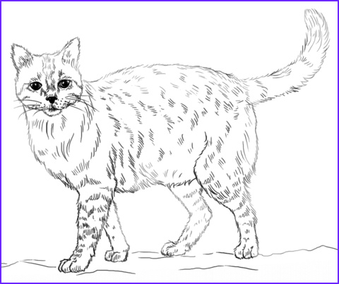 Realistic Cat Coloring Pages Awesome Photos Realistic Cat Coloring Page Cats Pinterest