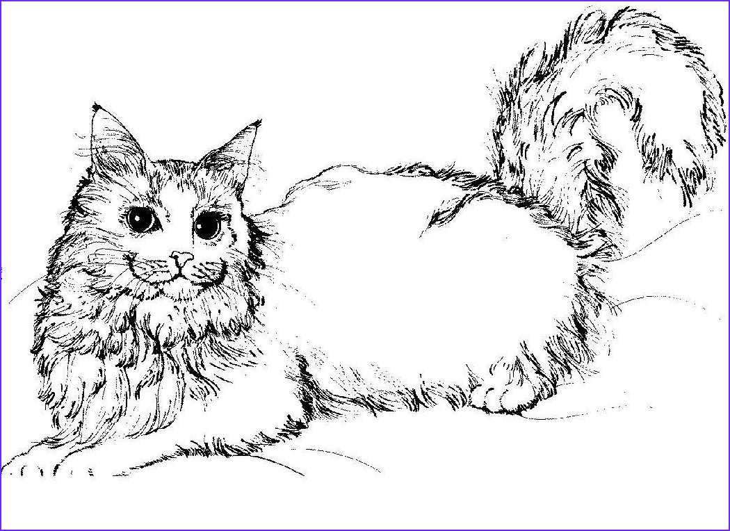 Realistic Cat Coloring Pages Elegant Photos Free Printable Cat Coloring Pages for Kids
