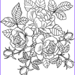 Roses Coloring Books Beautiful Image Roses Flowers Coloring Page