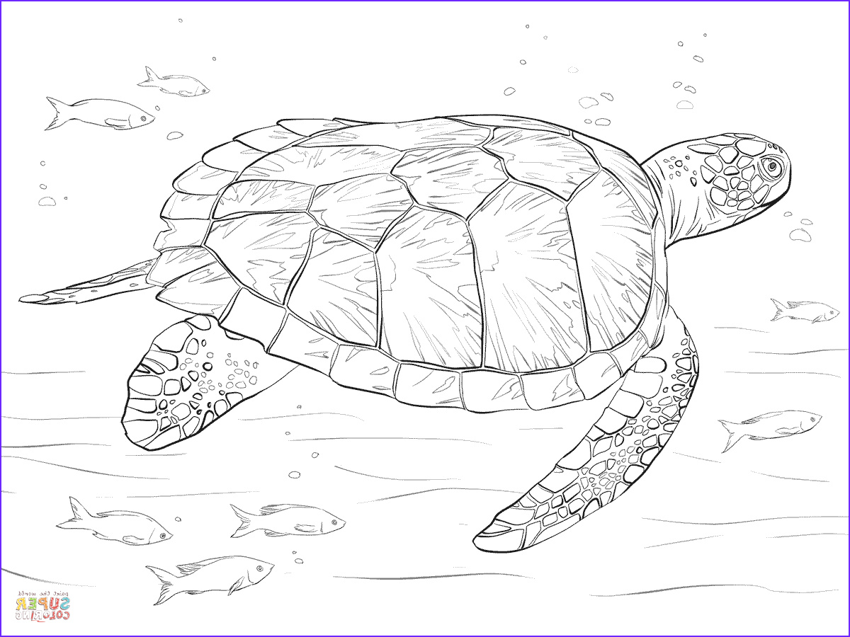 Sea Turtle Coloring Page Beautiful Photos Green Sea Turtle Coloring Page
