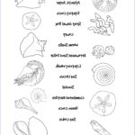 Seashell Coloring Page Awesome Photos Match the Seashells Printout for Kids