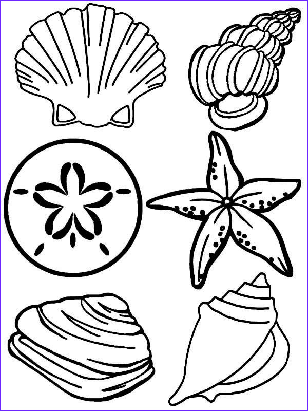 Beach shells coloring pages and print for free