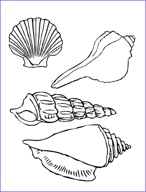 Seashell Coloring Page Elegant Stock Four Beautiful Types Of Seashell Coloring Page Download