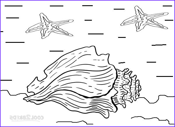 Seashell Coloring Page Inspirational Images Printable Seashell Coloring Pages for Kids