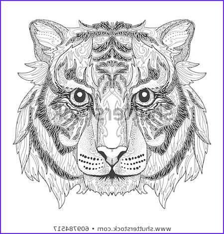 Tiger Coloring Pages for Adults Cool Photography Stock Royalty Free & Vectors