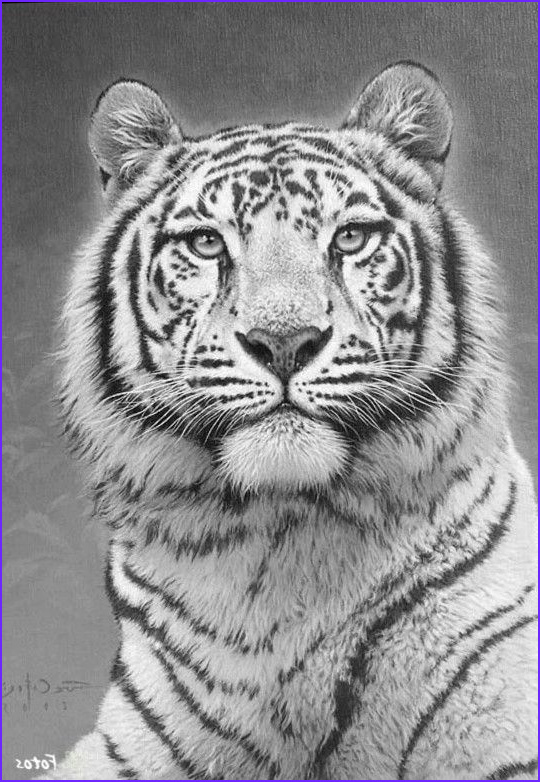 Tiger Coloring Pages for Adults New Image Tiger Cat Coloring Pages Colouring Adult Detailed Advanced