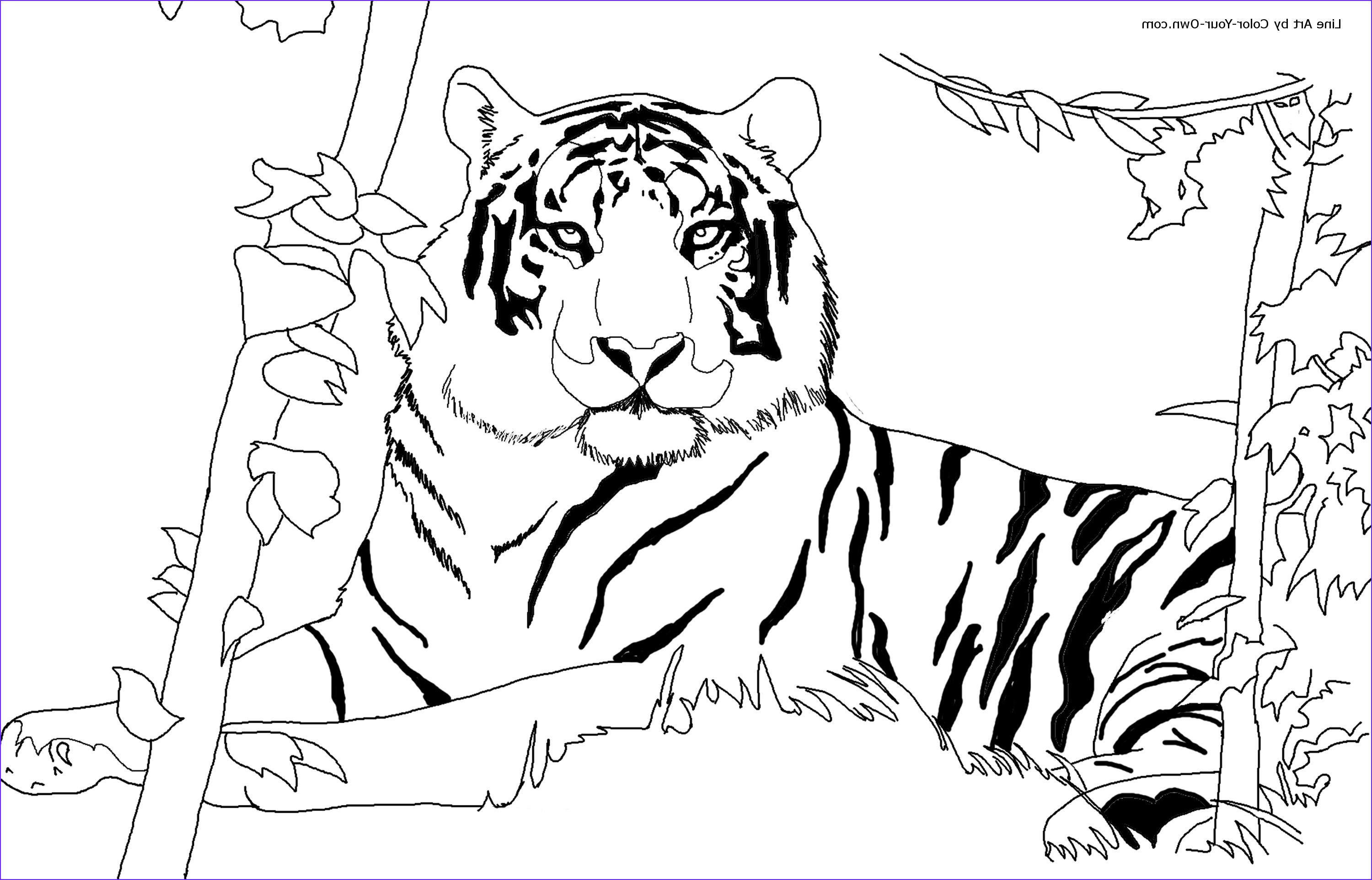 Tiger Coloring Pages for Adults New Photos Free Printable Tiger Coloring Pages for Kids