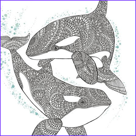 Whale Coloring Awesome Photography orca Whale Coloring Page