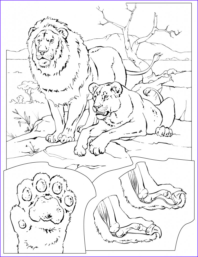 Wildlife Coloring Book Awesome Image Coloring Pages – Wildlife Research & Conservation