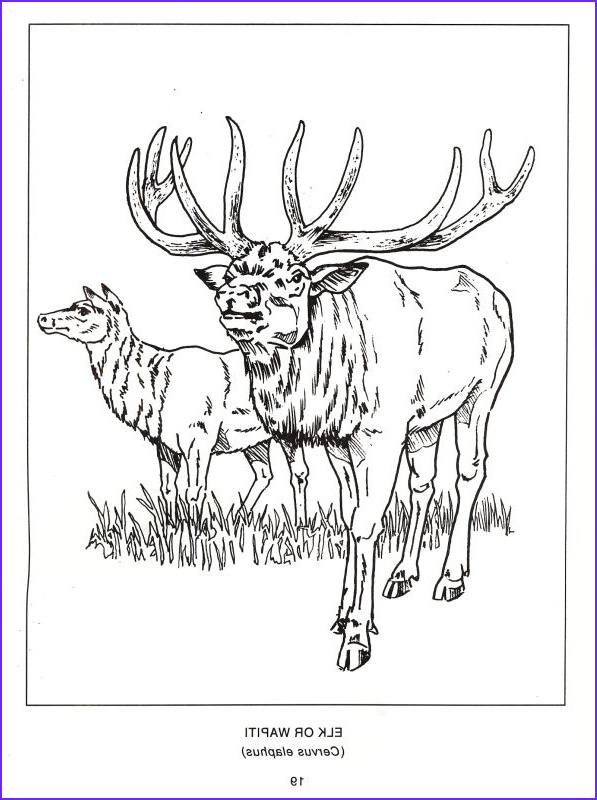 North American Wildlife Coloring Pages Coloring Pages