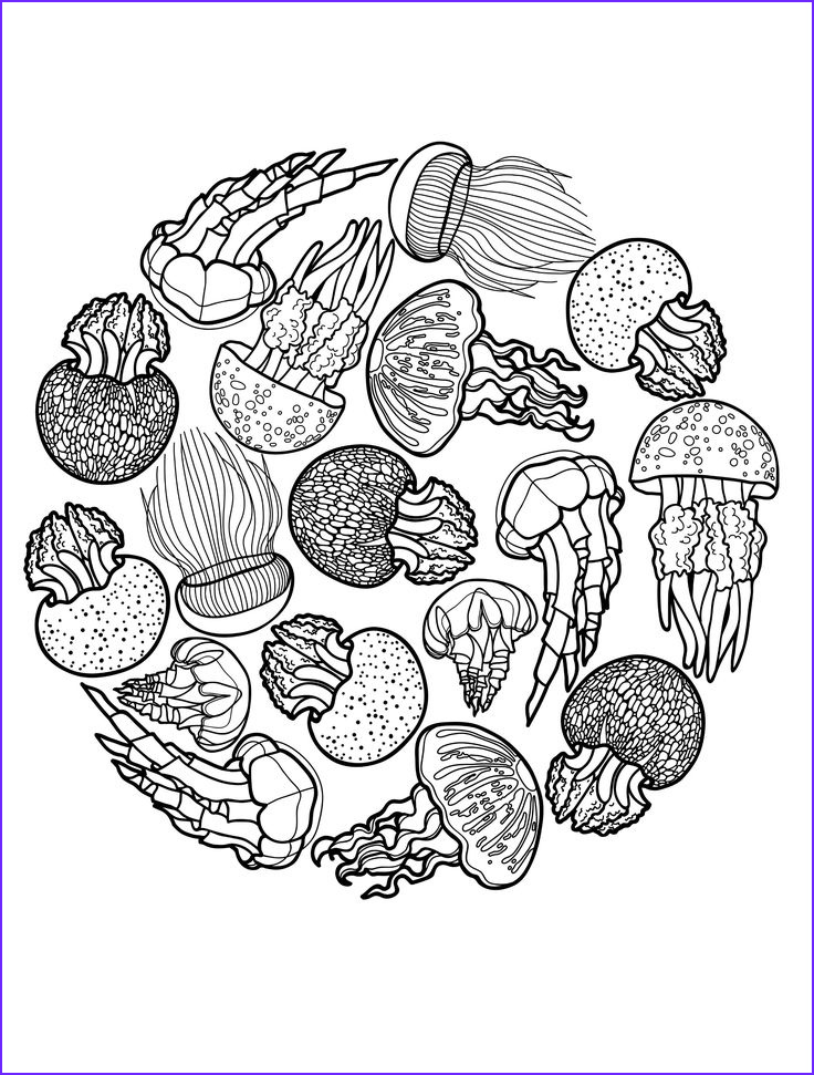 Wildlife Coloring Books New Collection 25 Best Ideas About Jellyfish Drawing On Pinterest