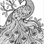 Adult Coloring Pages Free Printables Cool Photos Pin On Cute Ideas