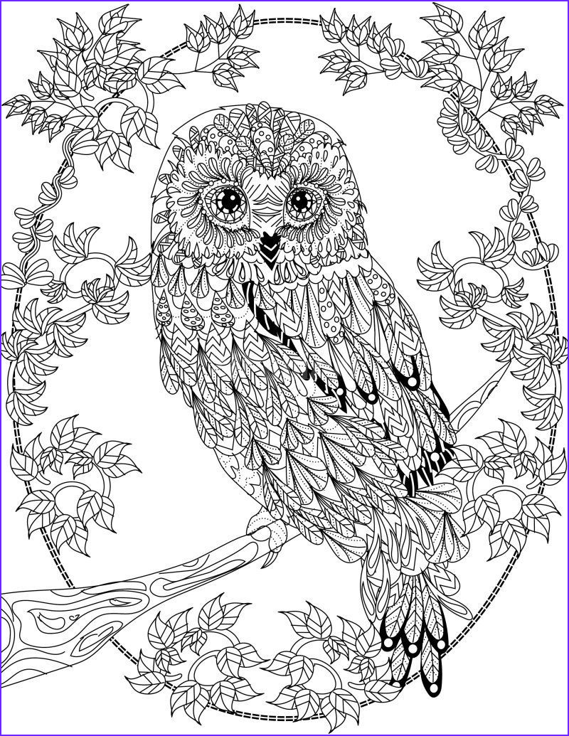 Adult Coloring Pages Owl Beautiful Stock Owl Coloring Page Design Ms