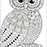 Adult Coloring Pages Owl Unique Gallery Best 25 Owl Coloring Pages Ideas On Pinterest