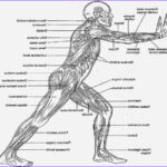 Anatomy And Physiology Coloring Book Pdf Best Of Photos Anatomy And Physiology Coloring Workbook Answers Chapter 6